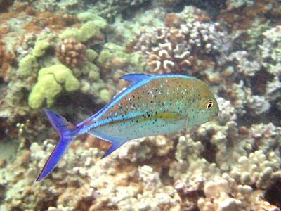 2007-11-29 Ahihi-La Perouse Snorkeling
