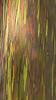 Rainbow eucalyptus pattern