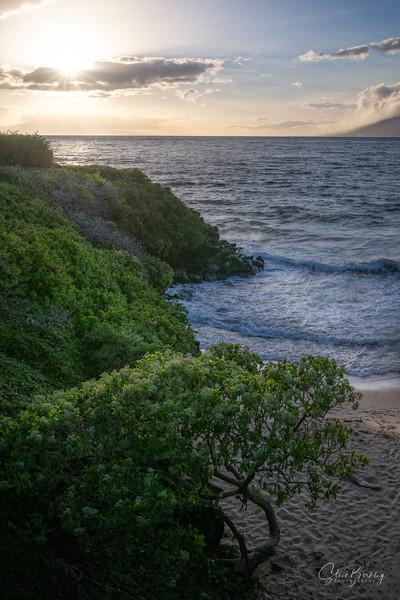 Maui Sunset IV