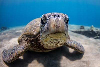 Smug Turtle