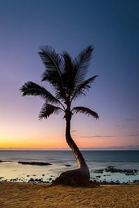 Mama's Palm