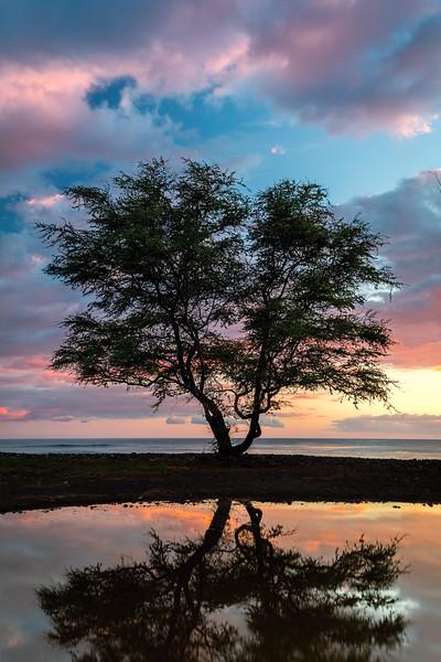 Kiawe Sunset