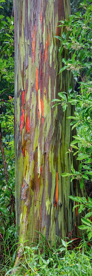 Anuenue Kala (Beautiful Rainbow)