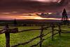 Koele Stable Sunset