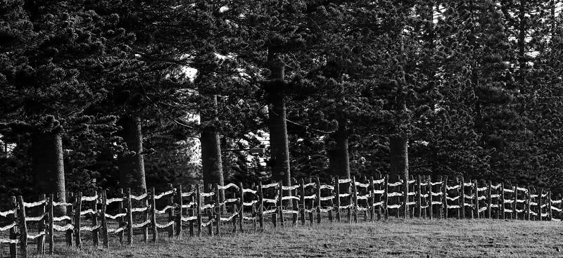 Koele Ranch Fence