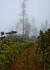 Munroe Trail fog