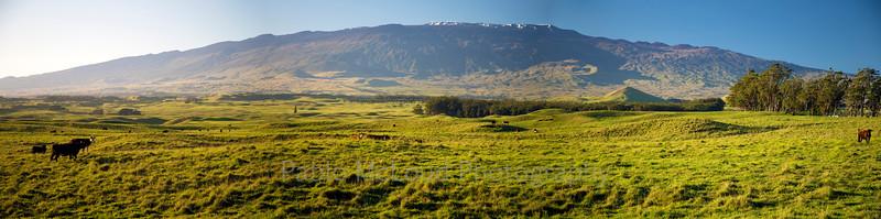Pasture Panorama