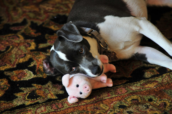 Maura and Piggy- April 2011