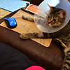 She loves my laptop ... you can see the shaved area on her left paw where an (IV) was inserted during her surgery 8-29-11.