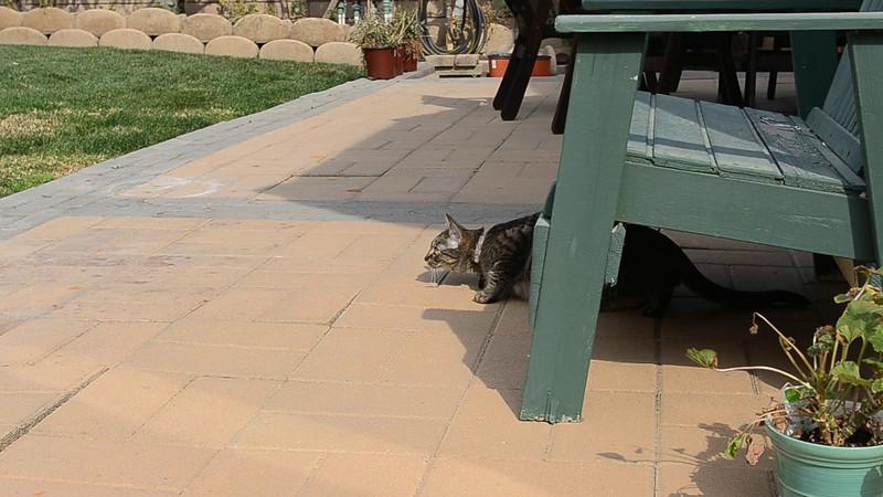 Waverly keeping an eye on backyard bird activity.