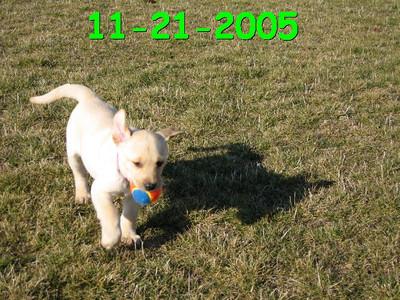 Maverick's First Ball