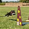 Flyball-196