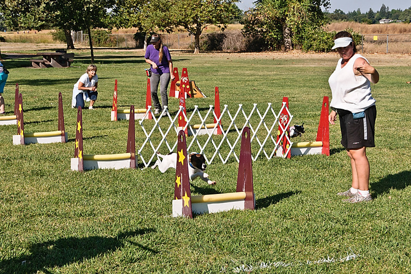 Flyball-069
