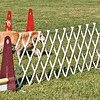 Flyball-110