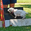 Flyball-020