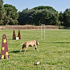 Flyball-057