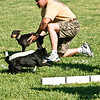 Flyball-101