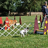 Flyball-049
