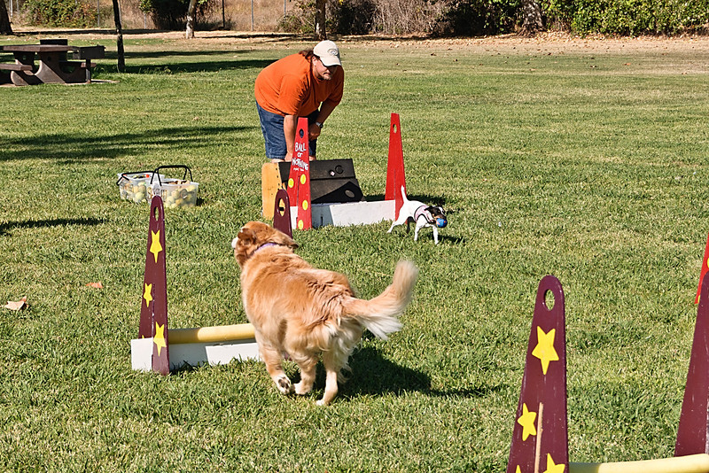 Flyball-113