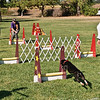 Flyball-071