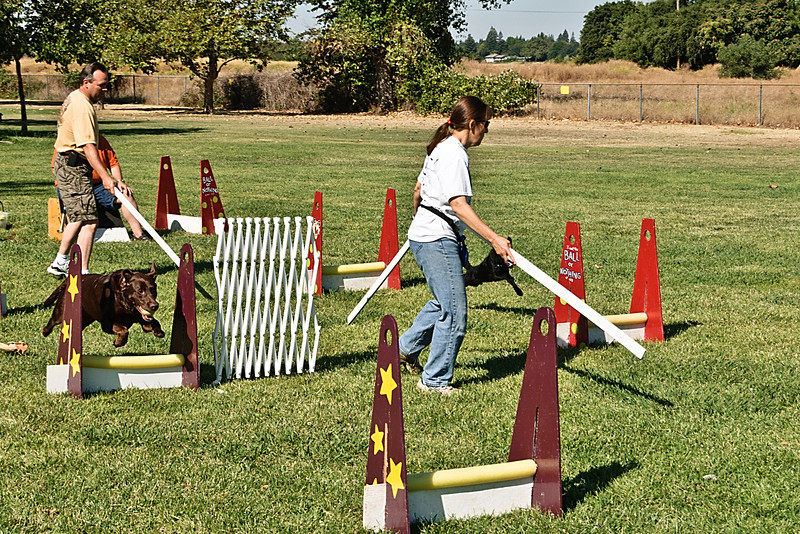 Flyball-122