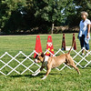 Flyball-052