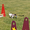 Flyball-114