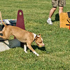Flyball-059