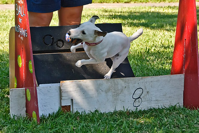 Flyball-022