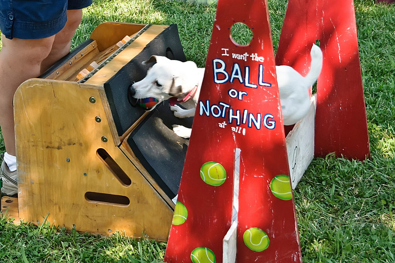 Flyball-023