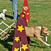 Flyball-062