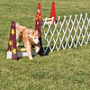 Flyball-107