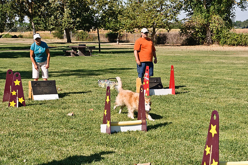 Flyball-105