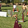 Flyball-136