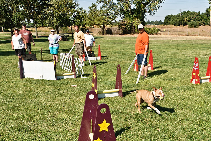 Flyball-134