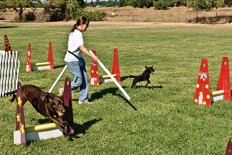 Flyball-121