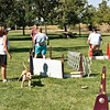 Flyball-129