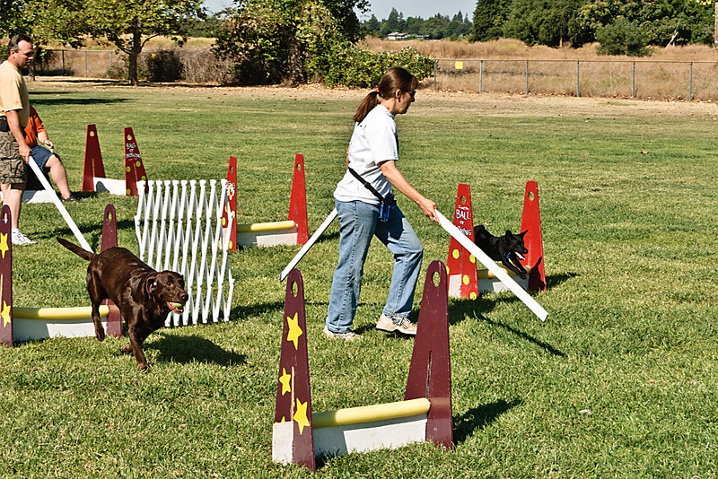 Flyball-123