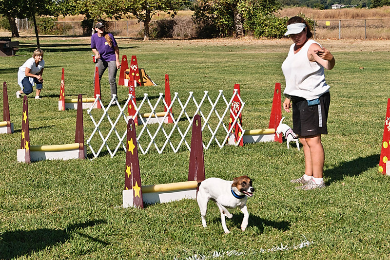 Flyball-070