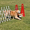 Flyball-111