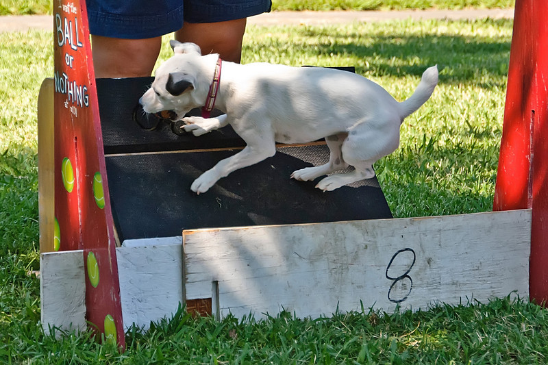 Flyball-021