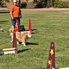 Flyball-108