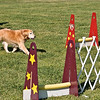 Flyball-109