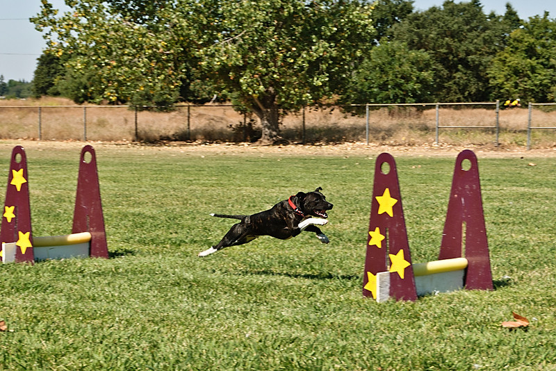 Flyball-190