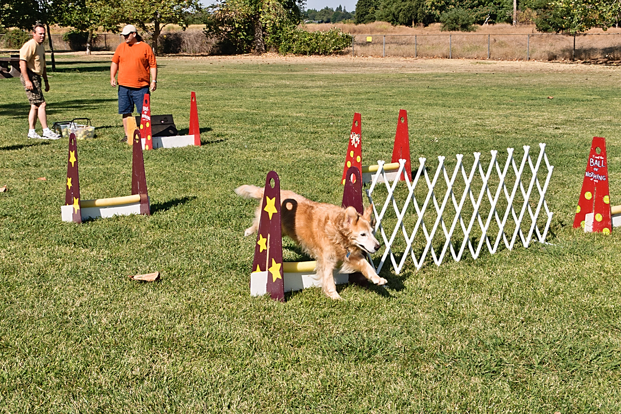 Flyball-112