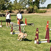Flyball-125