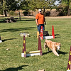 Flyball-106