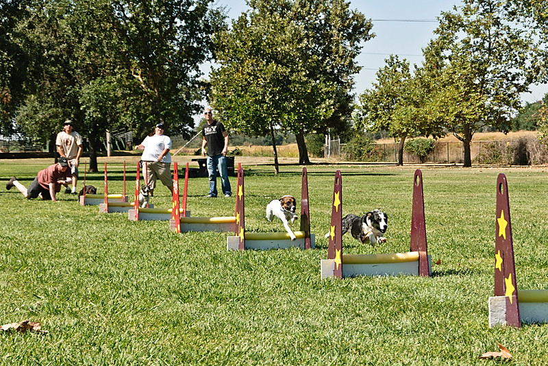 Flyball-194