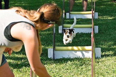 Flyball-014