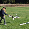 Flyball-047